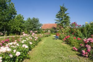Roseraie du Jardin du Tilleul