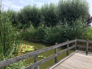 Marre du Jardin du Tilleul